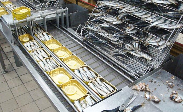 Ligne d'emboîtage sardines - Guelt Process